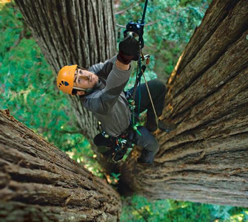 Redwoods-500