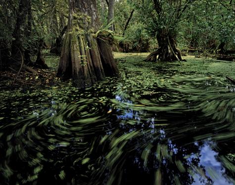 Swamp-tromp