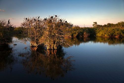 Everglades-national-park-mangrove_37651_600x450