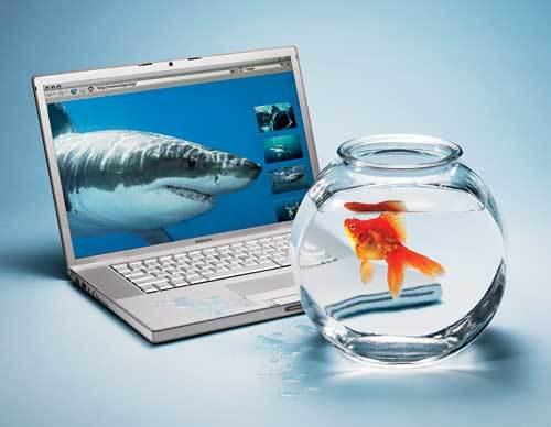 Fish500b